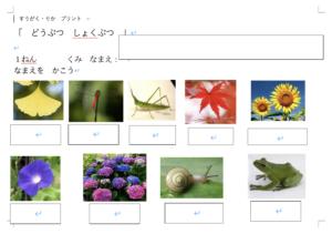 【プリント教材:動植物】動植物の名前
