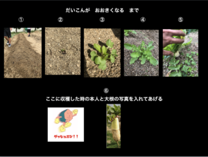 【スライド教材:大根成長記録】大根の成長の様子を順番に並べよう